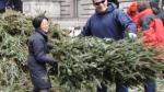 圣诞树回收 全民参与城市绿化