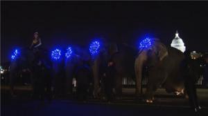 """首都华盛顿街头上演""""大象游行"""""""