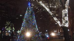 波士顿公园第72届圣诞树点灯 绚丽灯海迎接圣诞