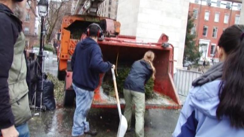 """圣诞树回收利用 纽约全市缤纷""""木屑节"""""""