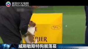 第138届年度狗狗选美大赛5岁萌犬夺冠 风光上电视下馆子吃牛排