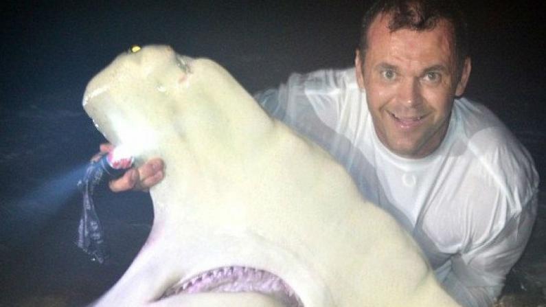 佛州男子钓鲨鱼夺冠 钓得重达千磅锤头鲨