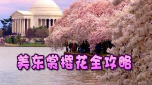 人间四月天 美东踏青赏樱花全攻略