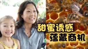 都市里的甜蜜诱惑 法拉盛华裔母亲养蜂创业