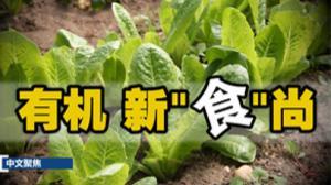 """中文聚焦:新""""食""""尚 有机更健康"""