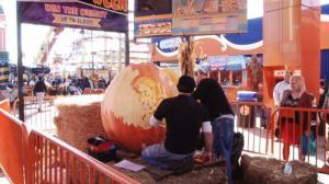 月神公园展出巨大南瓜雕刻 细节丰富栩栩如生