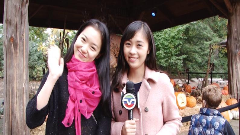 全美最大南瓜有多大?美女记者带您畅游纽约植物园南瓜节