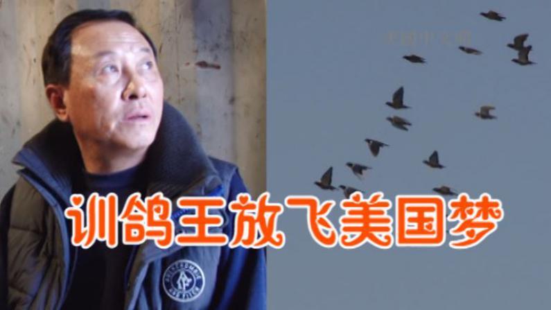 赛鸽一鸣惊人羡煞老外 华裔训鸽王创造奇迹