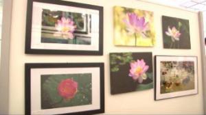 新英格兰艺术学会摄影展开幕 华裔摄影师作品展现生活之美