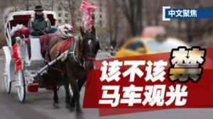 中文聚焦:中央公园马车该不该禁