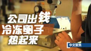 中文聚焦:公司出钱 冷冻卵子热起来