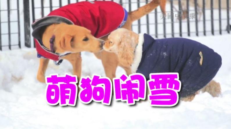 超级暴风雪过后狗狗撒欢 憨态可掬温暖寒冬