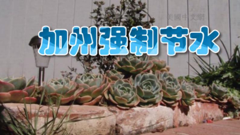 大旱逾三年加州首次强制节水 华裔居民挖掉青菜改种沙漠植物