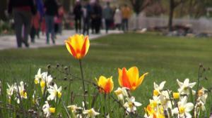 尽享春光 皇后区植物园举办植树节游园会