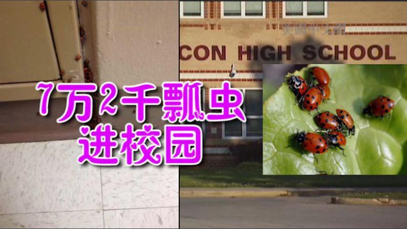 高中生带72000只瓢虫进校园 恶作剧不成面临多项指控