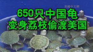 纽约环保局查获650只中国偷渡龟 动物保护组织为其祈福