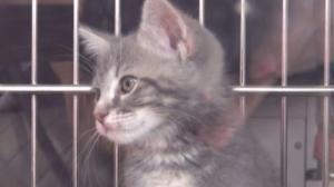 联合广场宠物领养集市 给小动物一个家