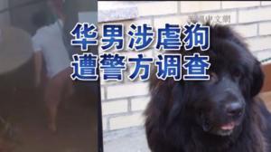华男涉嫌虐狗被拍下 网络视频引来警方调查