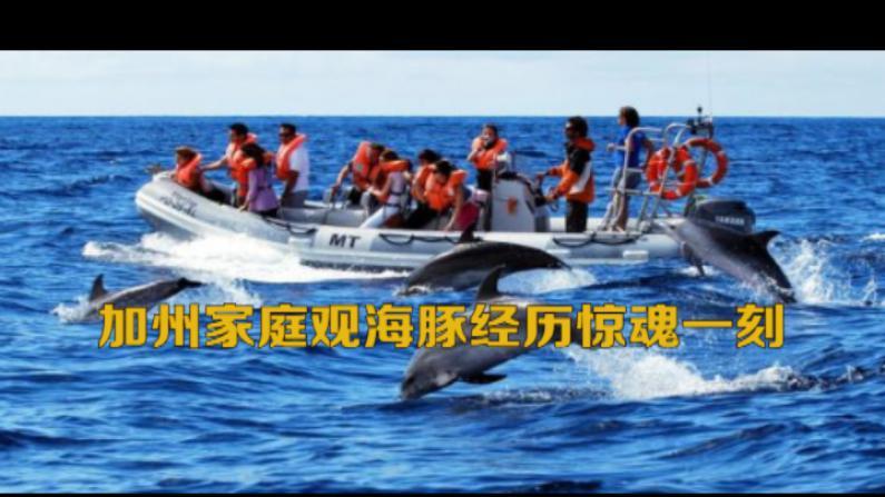 加州家庭观海豚经历惊魂一刻 海豚跳上船致人骨折