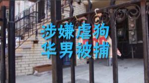 日落公园涉虐狗华男被捕 家中另外四只狗被带离