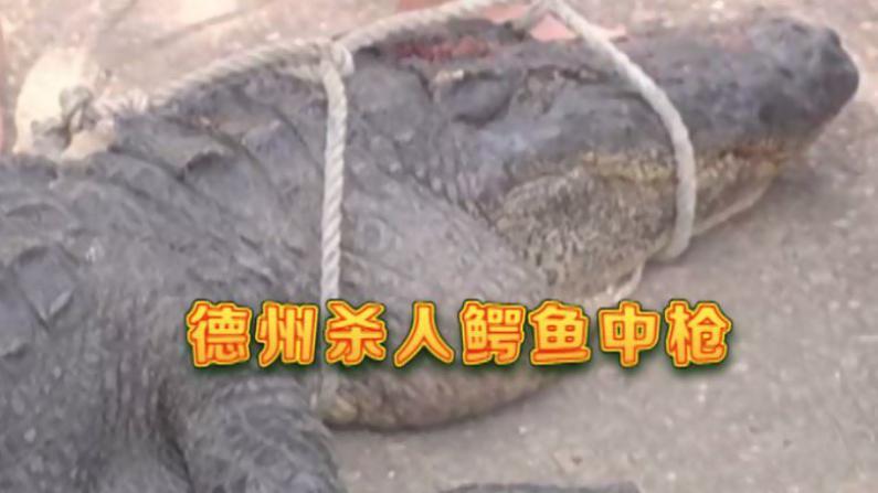 德州杀人鳄鱼尸体被打捞上岸 嘴里还有死者残肢
