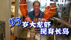 95岁高龄大龙虾重23磅  入住长岛餐厅成明星引来众粉丝