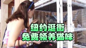 庆祝国际猫咪日 纽约逛街服装店内免费领养猫咪