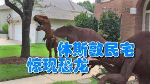 """休斯敦社区惊现两只""""恐龙""""? 意外来客引来邻居围观"""