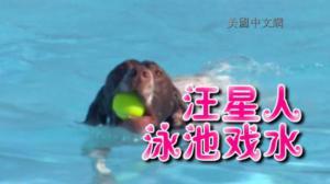 田纳西迎来狗狗游泳周 汪星人戏水尽显狗刨式风采