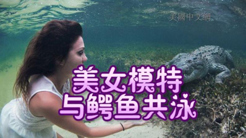 意大利美女模特用生命拍照 不带防护装备与鳄鱼共舞