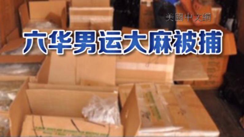 六华男涉非法搬运大麻被捕 辩称为200元时薪只管搬运