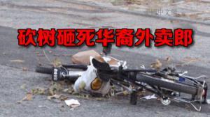 砍树砸死华裔外卖郎案 施工方及市府部门均有疏忽