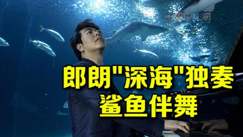 呼吁保护海洋生物 郎朗海底独奏鲨鱼伴舞