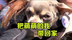 宠物萌翻联合广场 数百民众争相收养