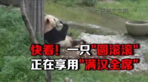 竹博园:大熊猫的满汉全席