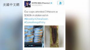 伪造文件盗窃百万高级鳗鱼 3名华裔鳗鱼大盗 布鲁克林销赃被捕