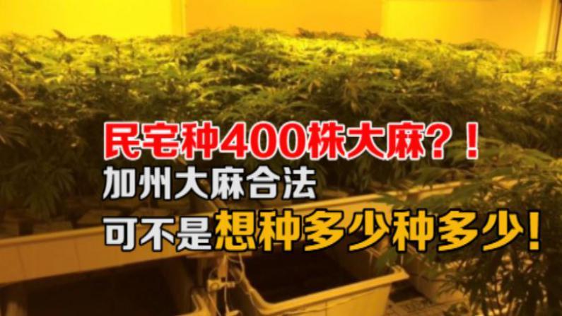 天普市惊现大麻屋  民宅种植超过400株大麻