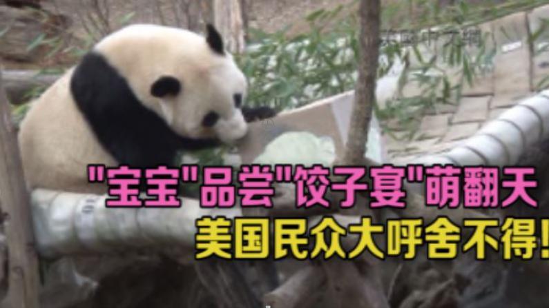 """宝宝要回国了!中国驻美使馆为宝宝准备""""送客饺子"""""""