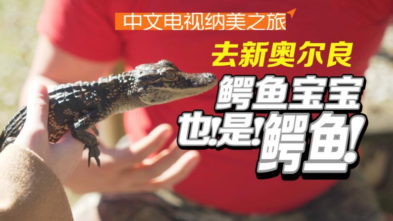 新奥尔良:大沼泽与短吻鳄