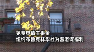 纽约布鲁克林华社免费为耆老申请生果金
