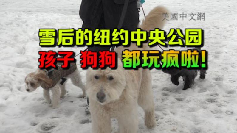 雪后纽约中央公园变身天然雪场 孩子狗狗都玩疯啦!