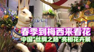 """第43届纽约梅西百货花卉展开幕  """"丝绸之路""""花坛独具中国特色"""