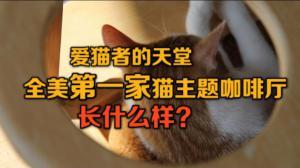 爱猫者的天堂 全美第一家猫主题咖啡厅长什么样?