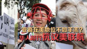 """亚裔在美地位""""不如羔羊""""?旧金山华人游行抗议美联航"""
