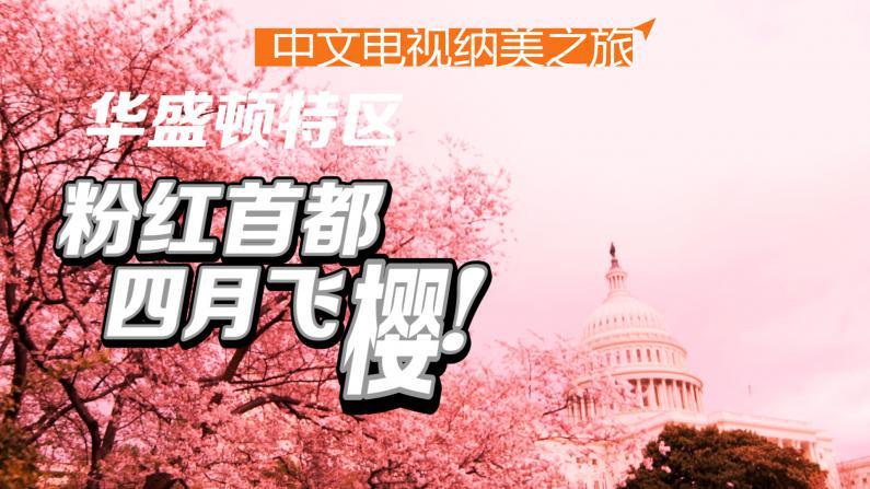 首都华盛顿:樱花盛开的四月