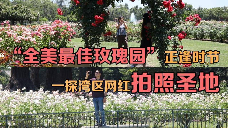 """""""全美最佳玫瑰园""""正逢时节!一探圣荷西网红拍照圣地"""