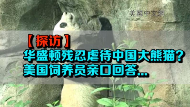 华盛顿国家动物园疑似虐待大熊猫?饲养员亲口告诉你…