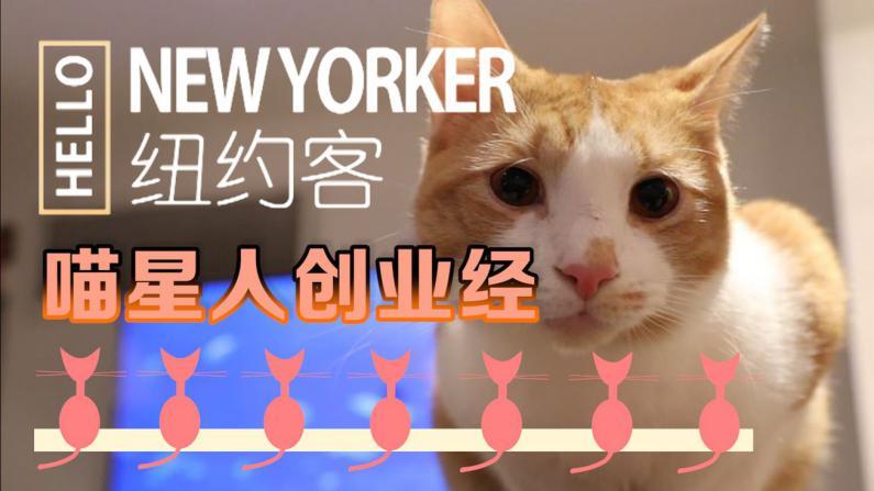 HELLO纽约客:猫咪咖啡馆的创业经