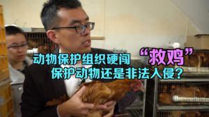 """动物保护组织闯家禽店""""救鸡""""惹争议  保护动物还是非法入侵?"""