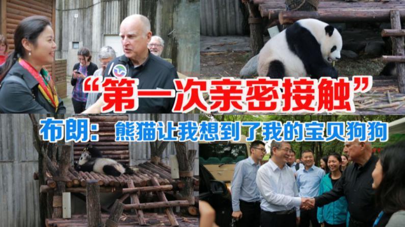 """加州州长布朗与中国成都大熊猫的""""第一次亲密接触"""""""